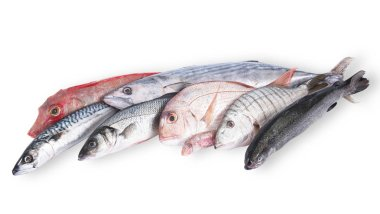 fresh fish collage in white background