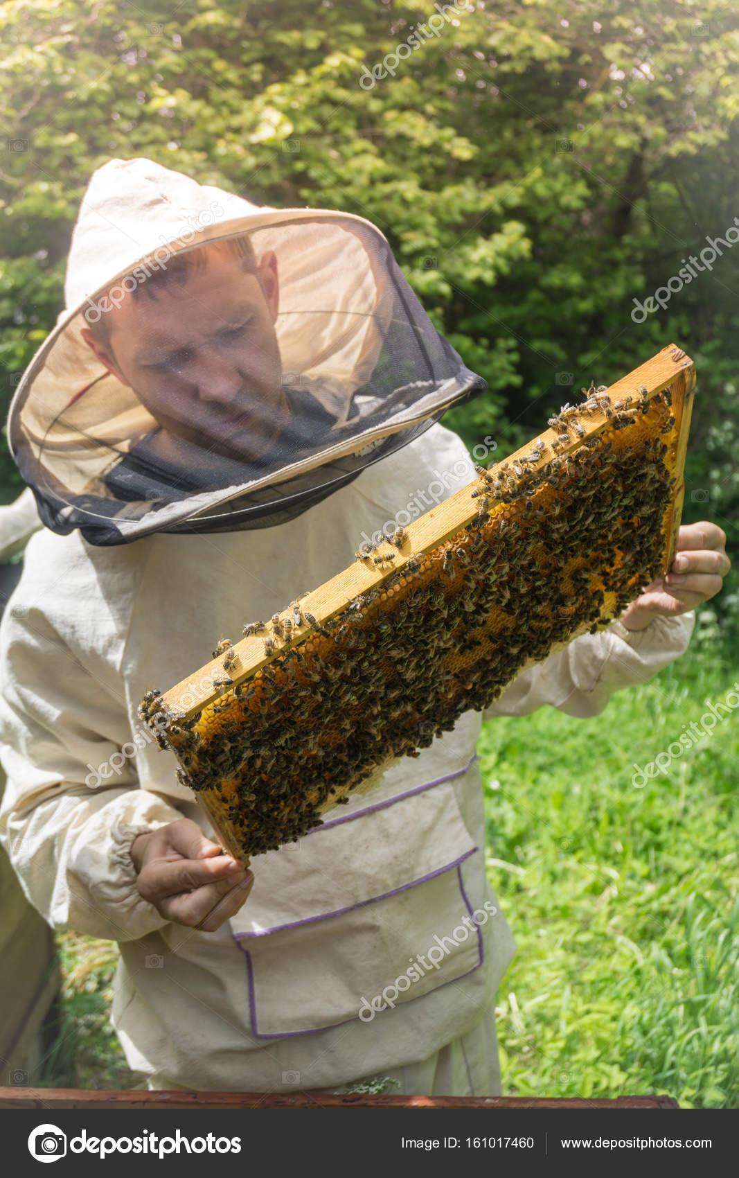 Apicultor trabajando con abejas en la colmena, mostrando el marco ...
