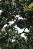 vegetace tropických stromů