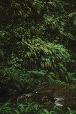 stream and lush tropical vegetation