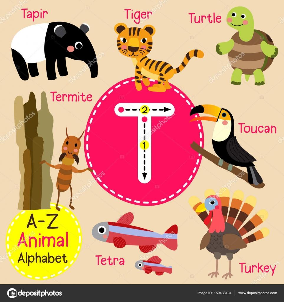 Trazo De Letra De Alfabeto T Niños Lindo Zoo De Animales
