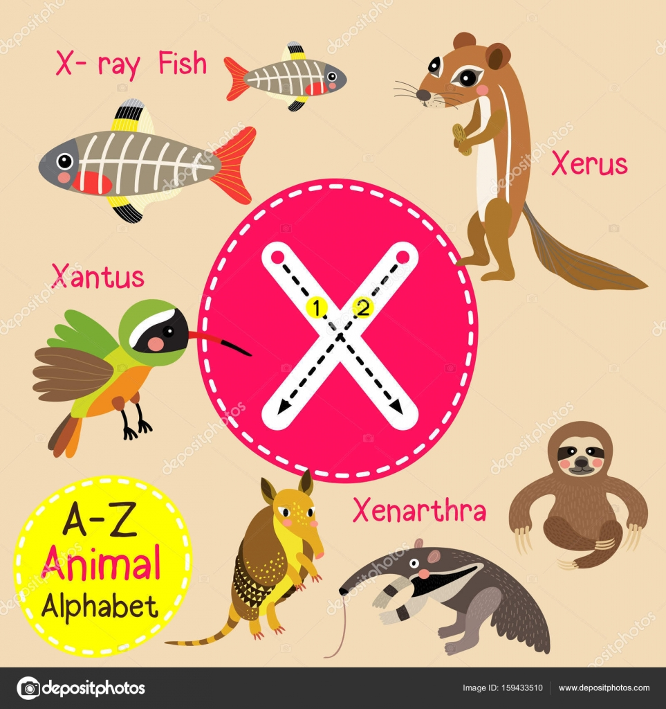 cute children zoo alphabet x letter tracing of funny animal