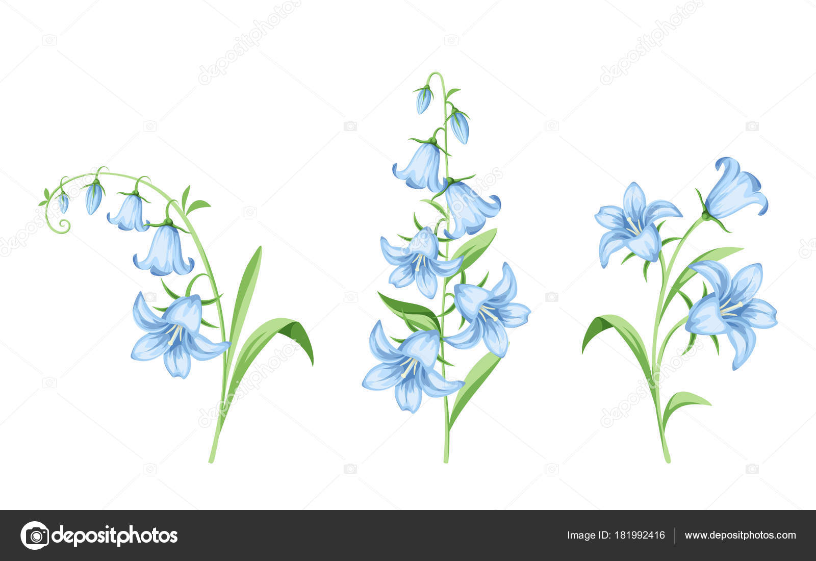 Set vector blue bluebell flowers isolated white background stock set vector blue bluebell flowers isolated white background stock vector mightylinksfo Gallery