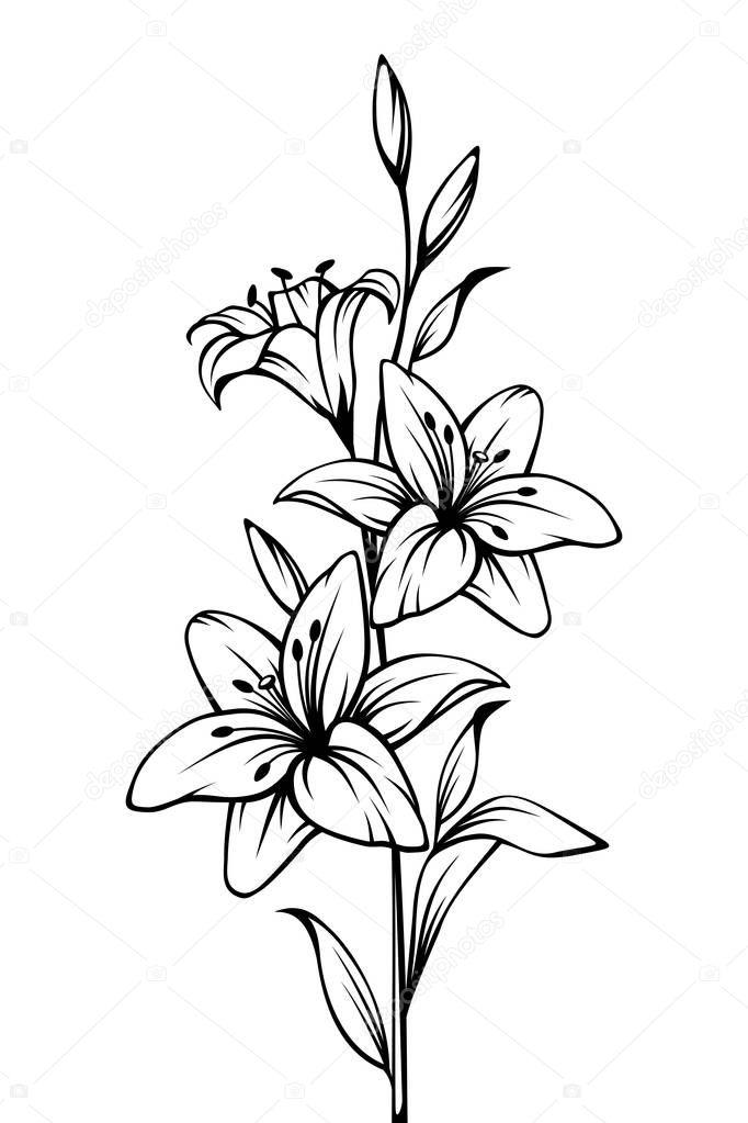 Contour vector noir blanc dessin fleurs lys image - Dessin contour ...