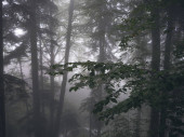 Beautiful forest of Caucasus mountains in fog. Russia