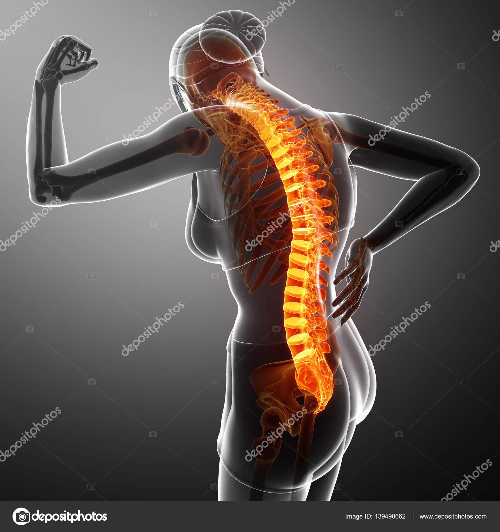 Women Feeling the Back pain — Stock Photo © pixdesign123 #139498662