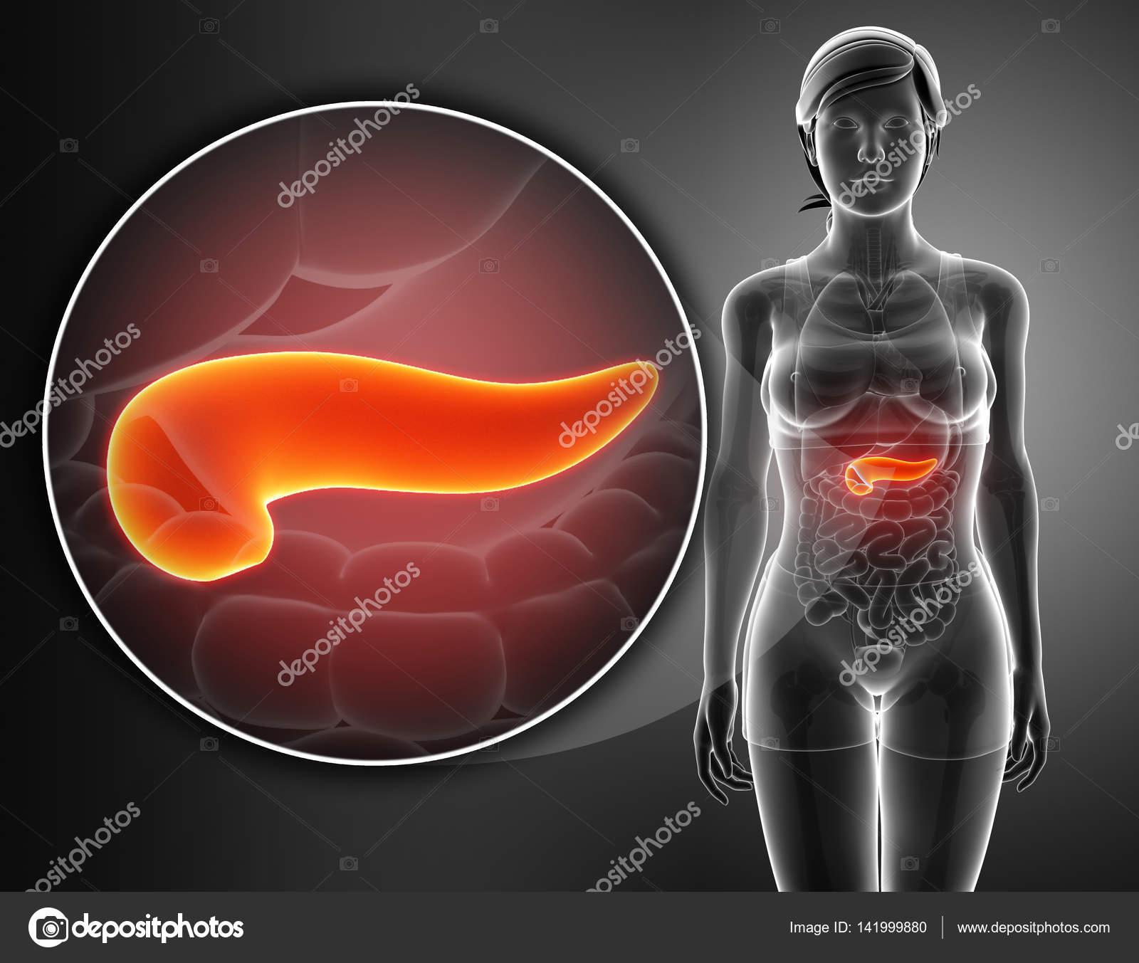 render 3D de la anatomía del páncreas — Fotos de Stock ...