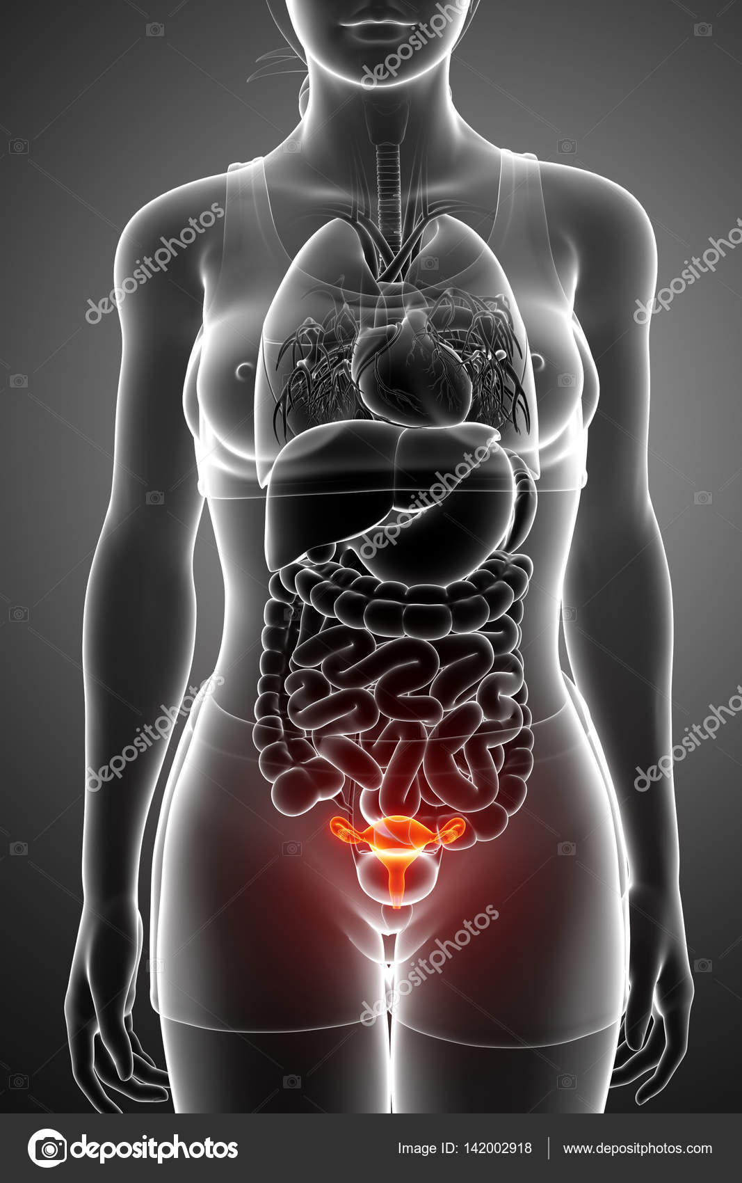 3D render de sistema reproductor femenino — Foto de stock ...