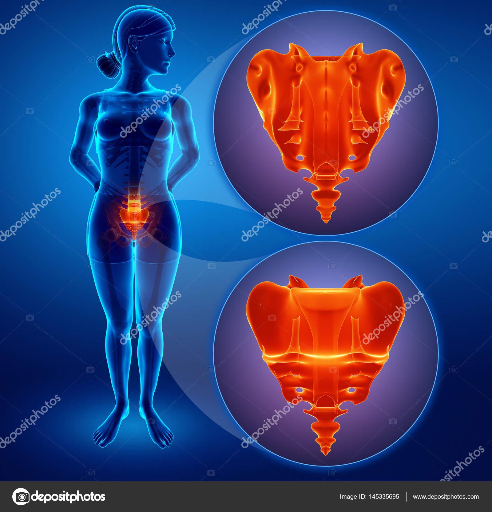 Ilustración 3D de dolor de hueso sacro — Fotos de Stock ...