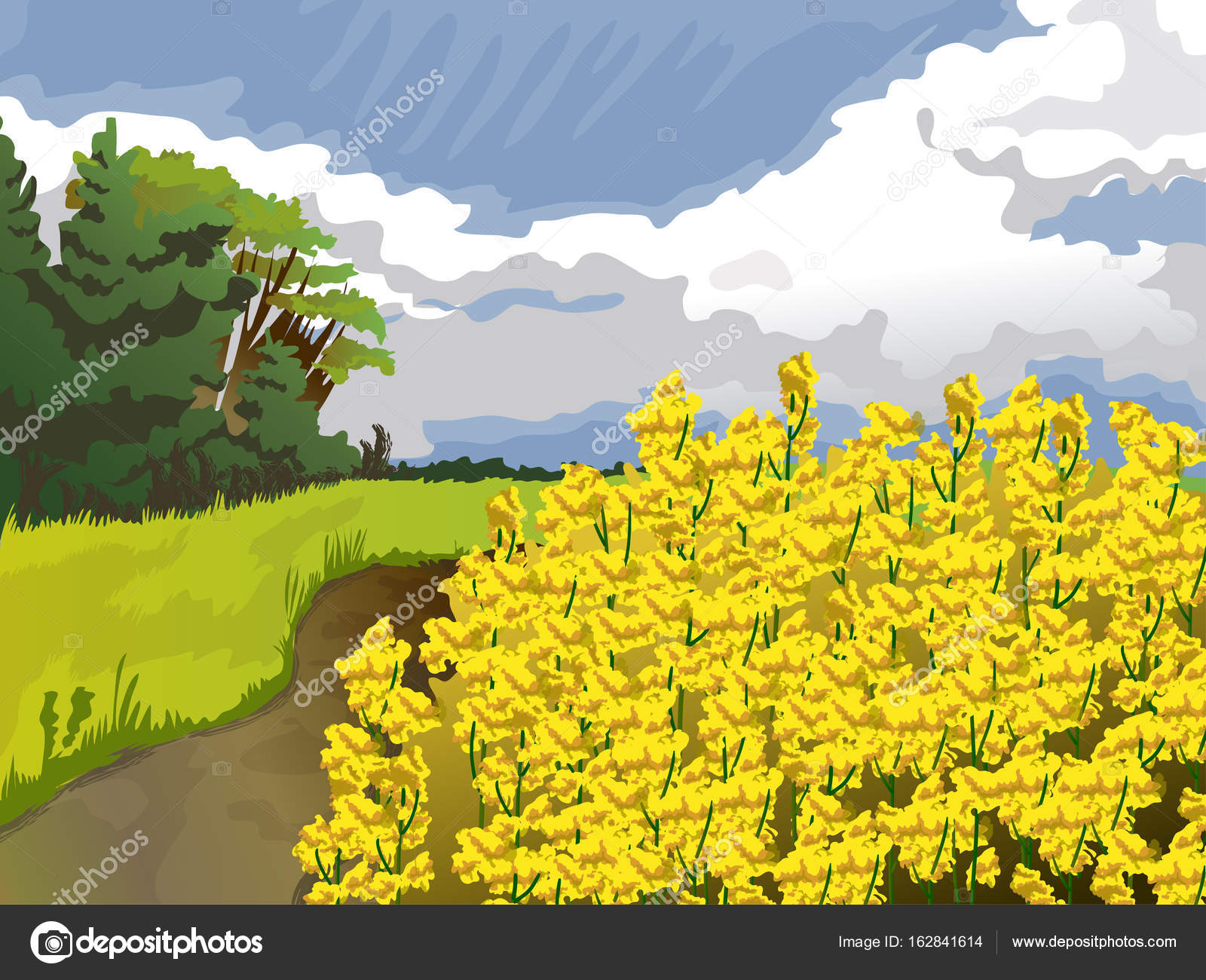 Field With Yellow Flowers In Blue Sky And White Clouds Trees And