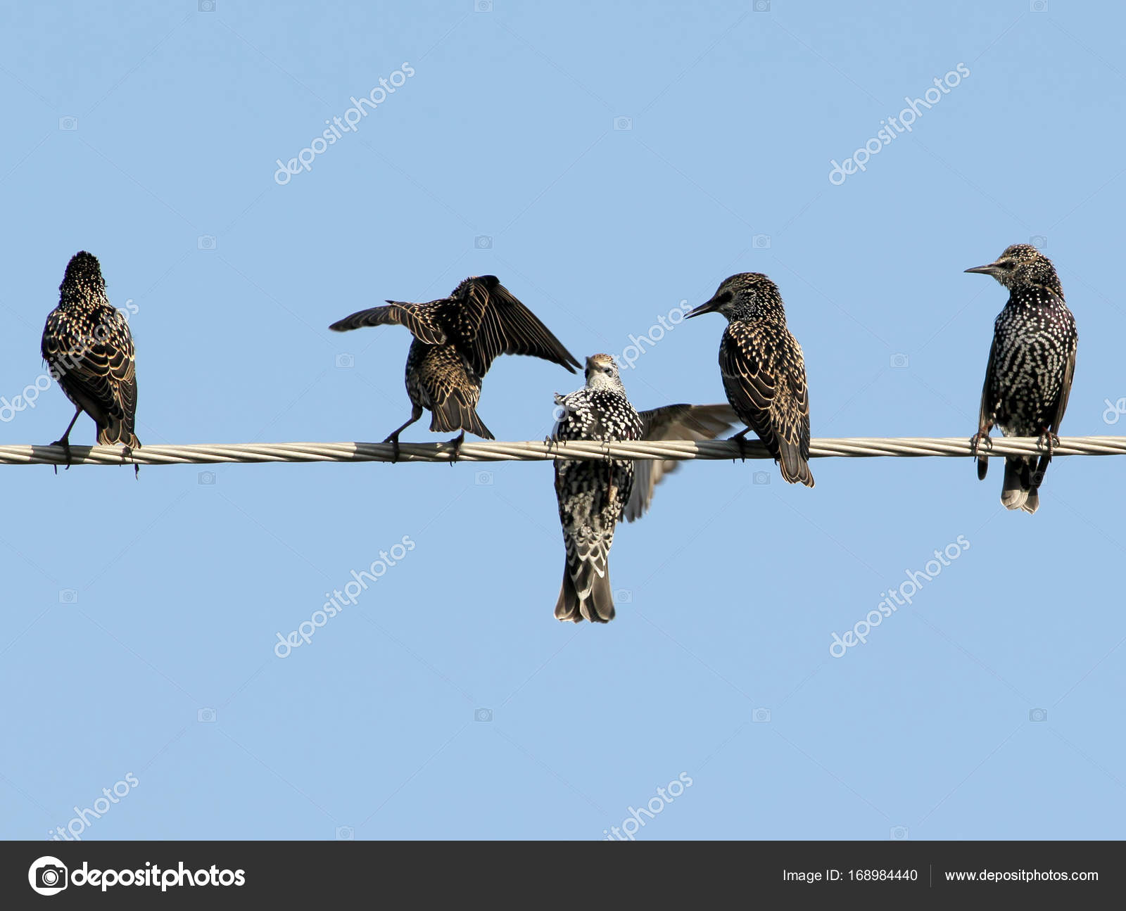 Common starlings on electrical wire unusual view — Stock Photo ...