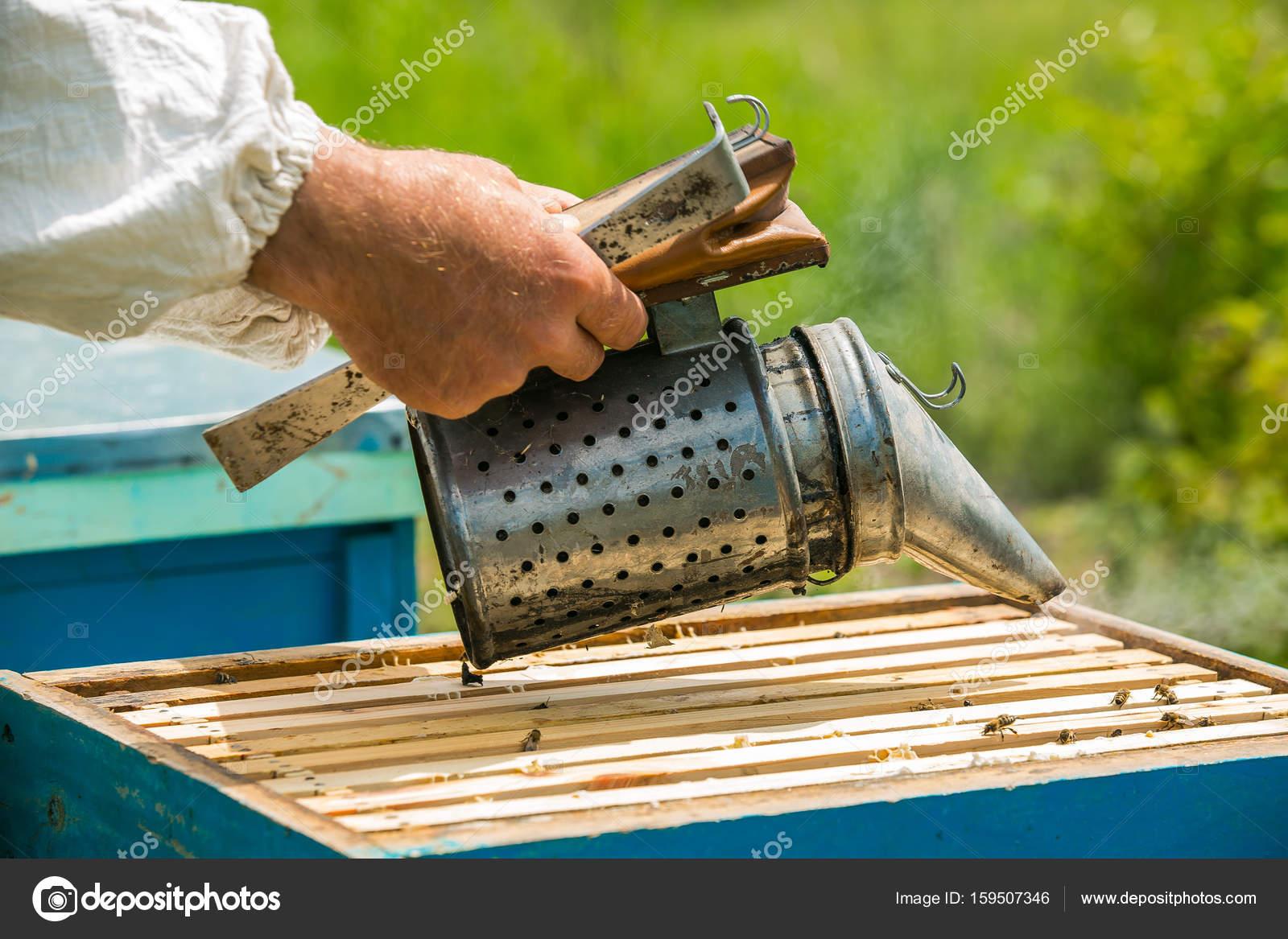 El apicultor hace humo en la colmena. Marco con abejas. Apicultor ...