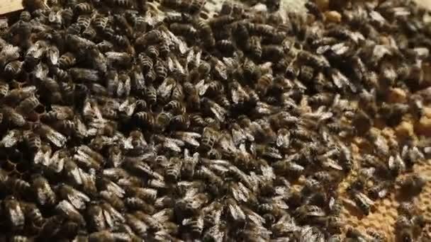 Detailní záběr v roj včel úl
