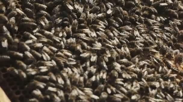 Pracovní včely na Honeycomb