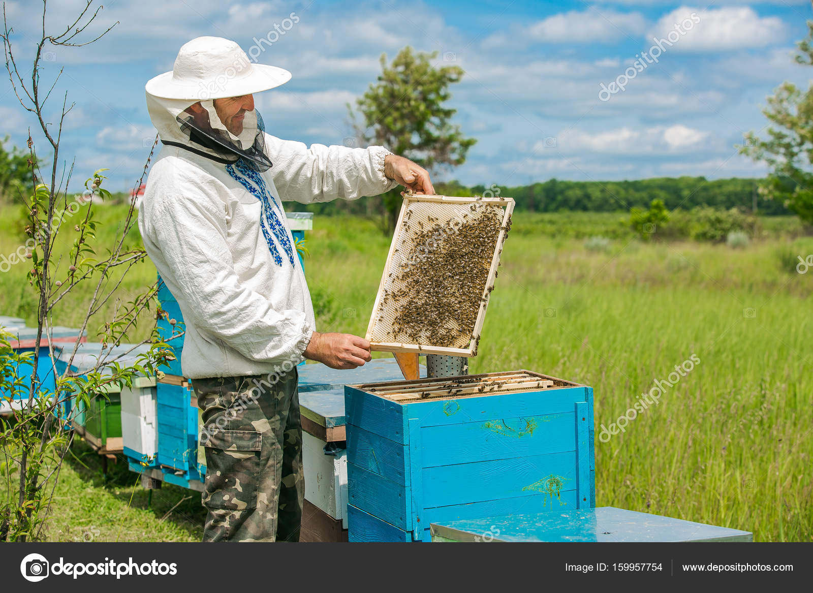 Beekeeper is working with bees and beehives on the apiary. Frames of ...