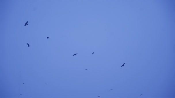 Hejno ptáků létat na obloze. Černí ptáci v zimních podmínkách