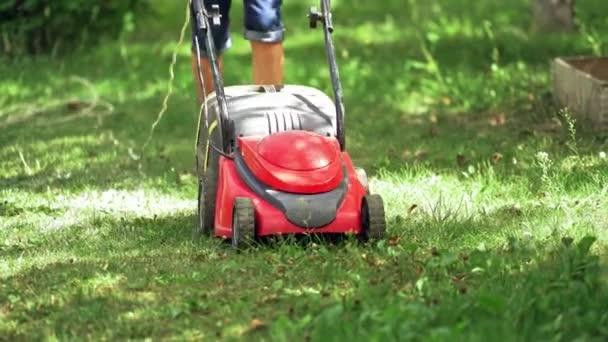 Sekačka seká trávu. Zahradník sekání trávy s sekačkou na krásném prostorném dvorku