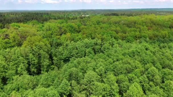 Coniferous and deciduous trees. Aerial top view of green trees in forest background