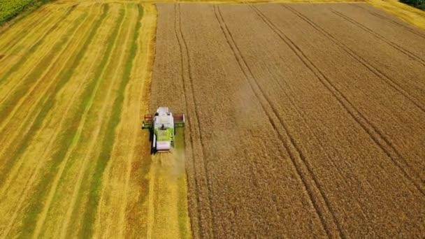 Kombinovat sklizeň pšeničného pole. Letecký pohled na kombinaci pracující na pšeničném poli