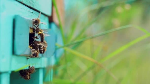 Méhecske lassú mozgása repked a méhkasban homályos háttérrel. Méhészet nyáron.