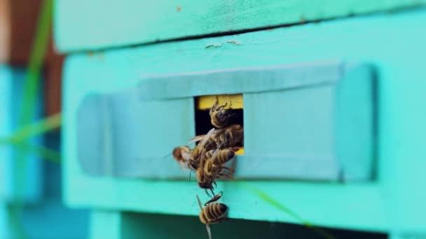 A méhek lassú mozgása repked a méhkasban. Méhészet nyáron.