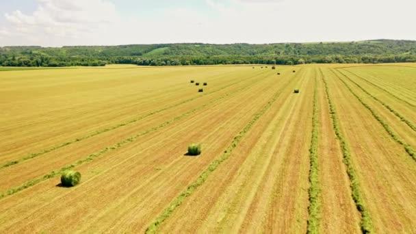 Letní pole s balíky trávy. Letecký pohled na přírodní pole během zemědělských prací pro sběr sena pro hospodářská zvířata. Traktor pracující na venkovním statku.