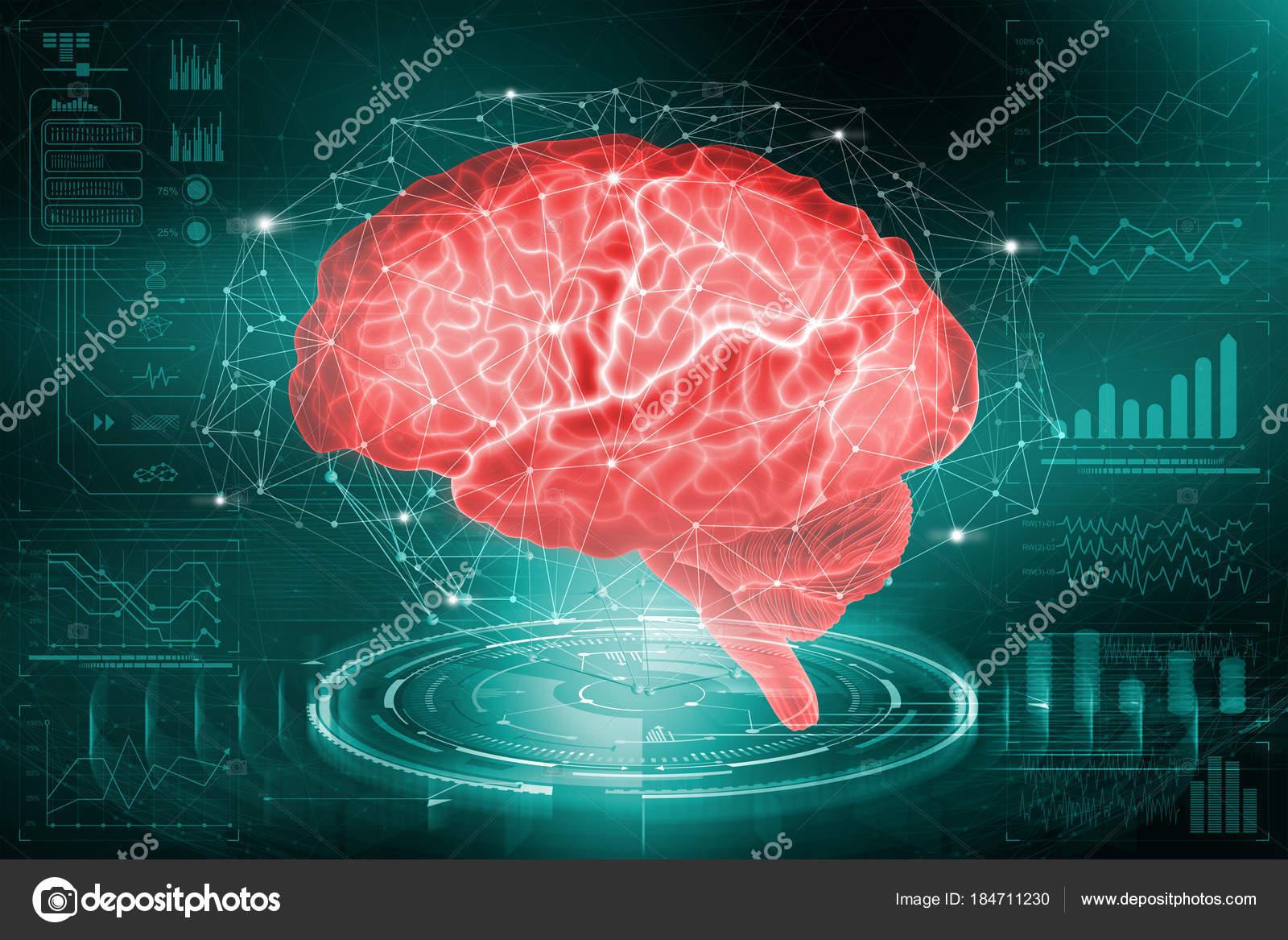 Das Menschliche Gehirn Die Studie Über Die Möglichkeiten Des Gehirns ...