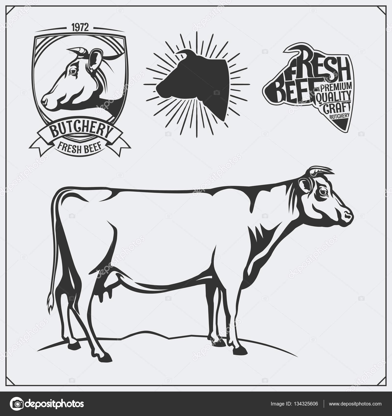 Vektor-Fleisch-Etiketten und Illustration der Kuh. Vorlagen für die ...