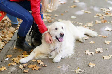Beautiful cutie dog walking with owner outdoors. Pet concept.