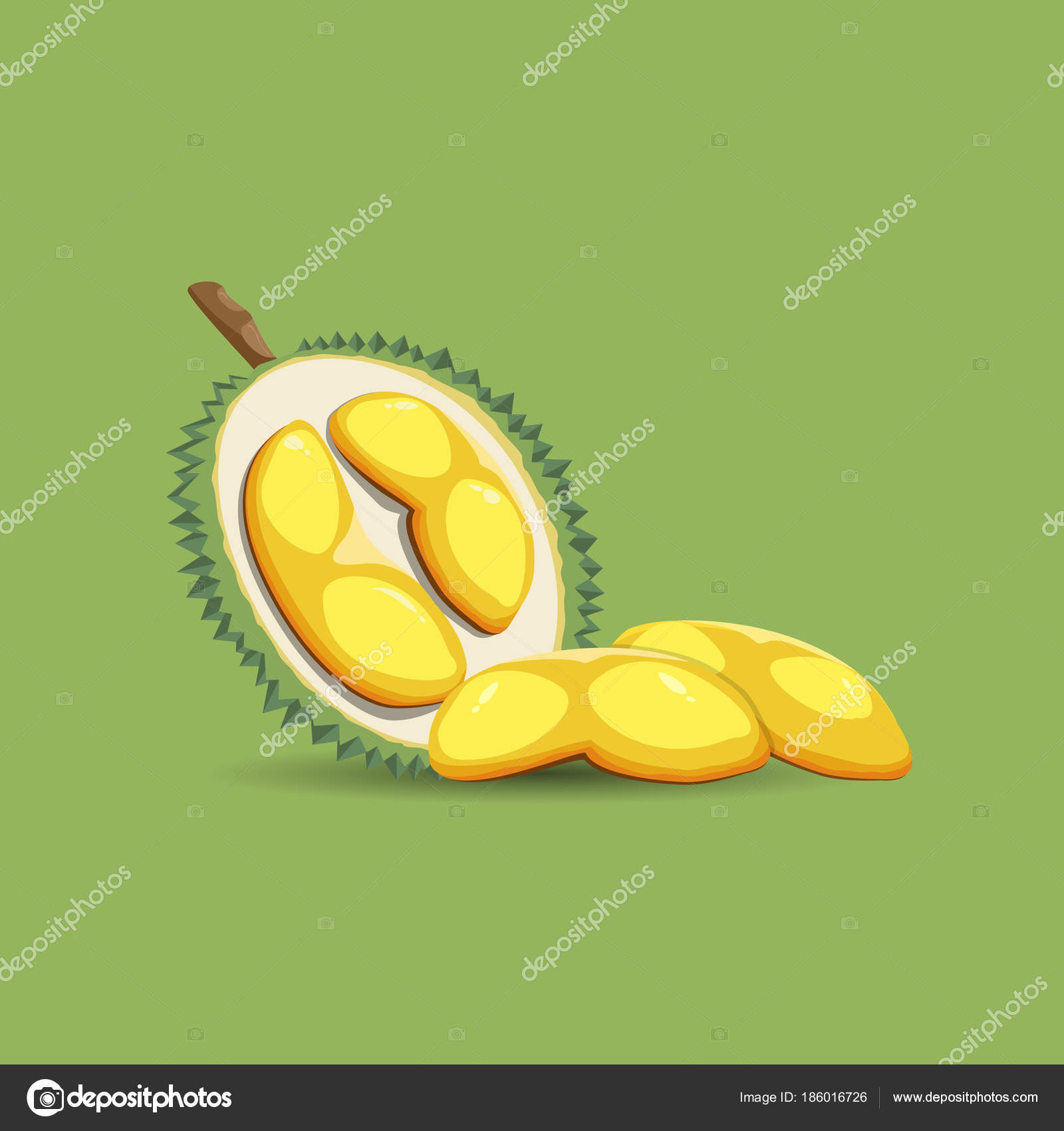 exotic fruit durian on a green background. a half of fresh, organic