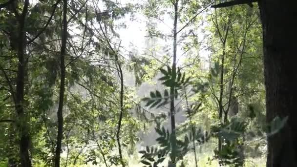 déšť v lese