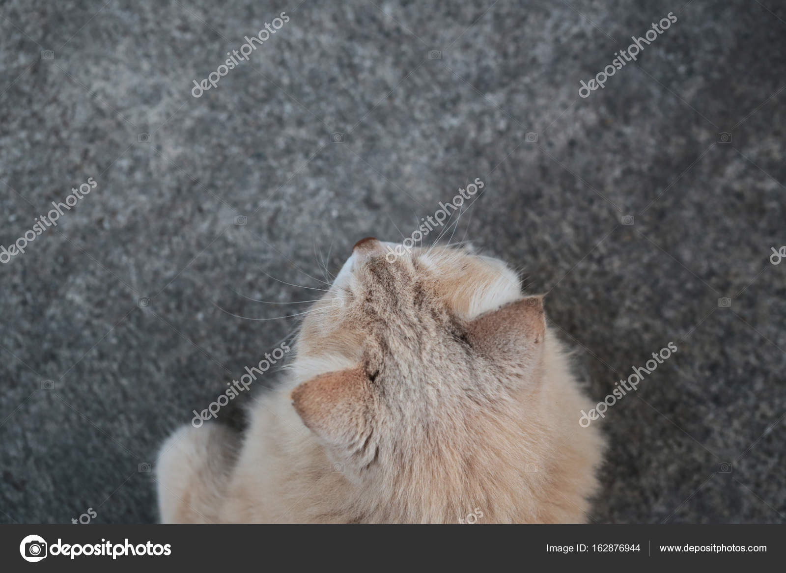 Brown Hair Cat On Cement Floor Photo With Top View By Yphotoland