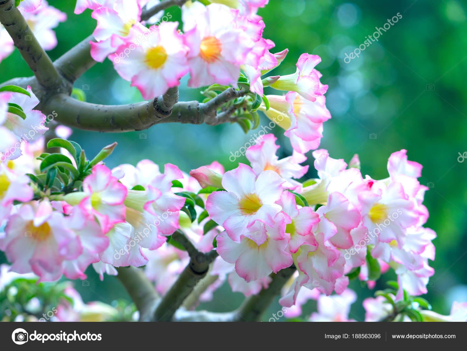 Фото цветов сад аромат