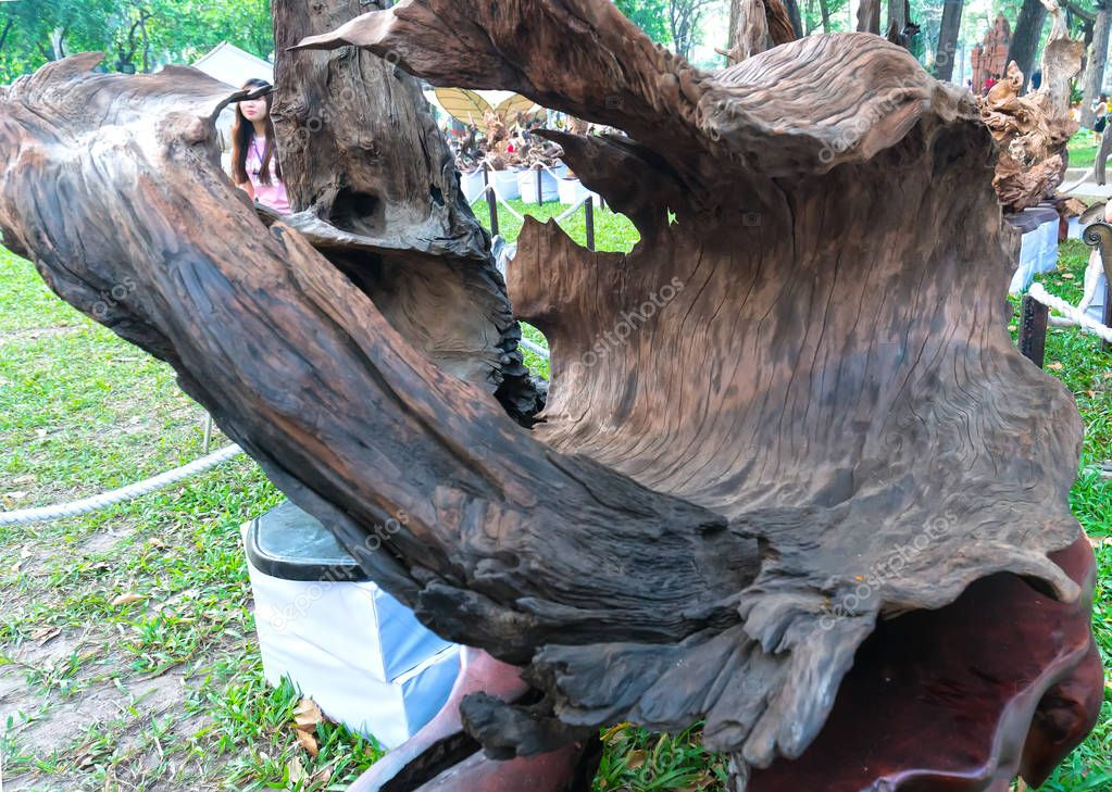 Ho Chi Minh City, Vietnam - February 11, 2018: Tree dry wood in various shapes art beautifully exhibited in Congress spring attract tourists to enjoy of spring Lunar New Year in Ho Chi Minh, Vietnam