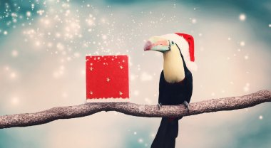 Toucan in Santa hat and Christmas present