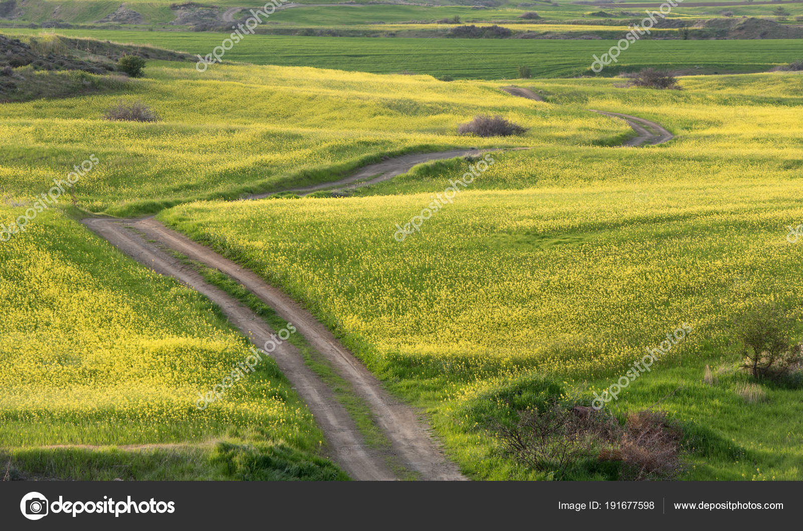 Beautiful field with yellow flowers in spring stock photo mpalis beautiful field with yellow flowers in spring stock photo izmirmasajfo