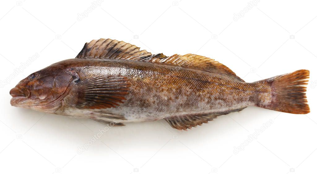 greenling isolated on white background