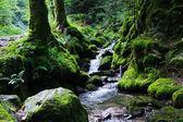 Foresta verde. Germania foresta