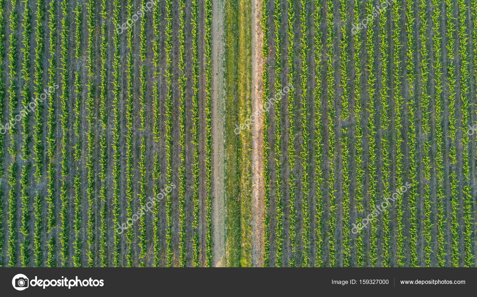 Aerial Top View Of Vineyards Landscape From Above Background Photo By JaySi