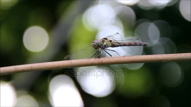 A dragonfly with a green background, closeup