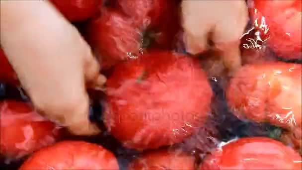 Samice zemědělce praní rajčat ve vodě