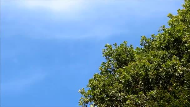 Thick oak branches against a bright blue sky