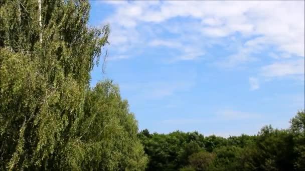 Bříza a další listnaté stromy