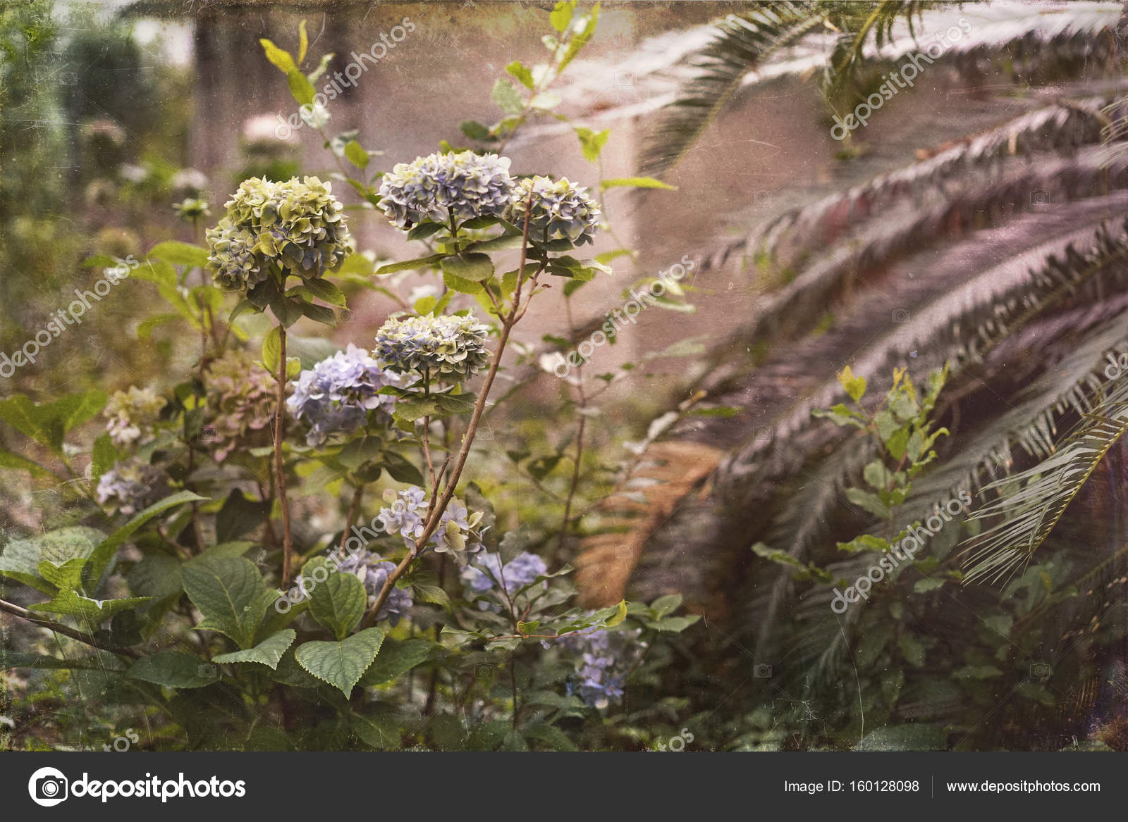 Overgrown Southern Garden Vintage Photo — Stock Photo © forestpath ...