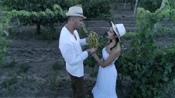 mladá země rodina se zralými hrozny na vinici komunikovat při sklizni, letecký pohled