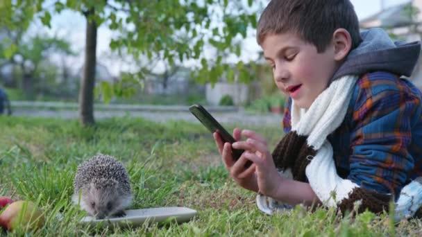 vonzó fiú, aki szereti a vadon élő állatok táplálja aranyos sündisznó finom tej csészealj és veszi állatállomány mobiltelefon kamera, miközben szórakozás zöld mezőn