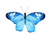 Aquarell-Schmetterling, isoliert auf weißem Hintergrund