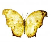 Akvarell pillangó, elszigetelt fehér háttér