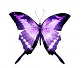Fényképek Akvarell pillangó, elszigetelt fehér háttér
