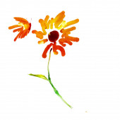 Watercolor sketch of butterfly and flower
